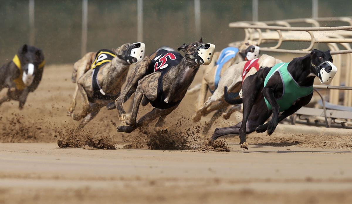 Greyhound casino dubuque casino royale maho hours