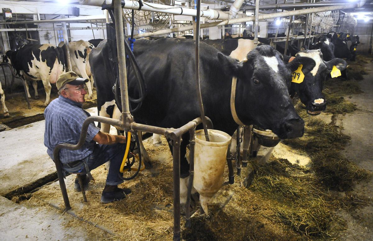 Small Dairy Farms Struggle To Survive The Bullvine The Dairy Information You Want To Know When You Need It