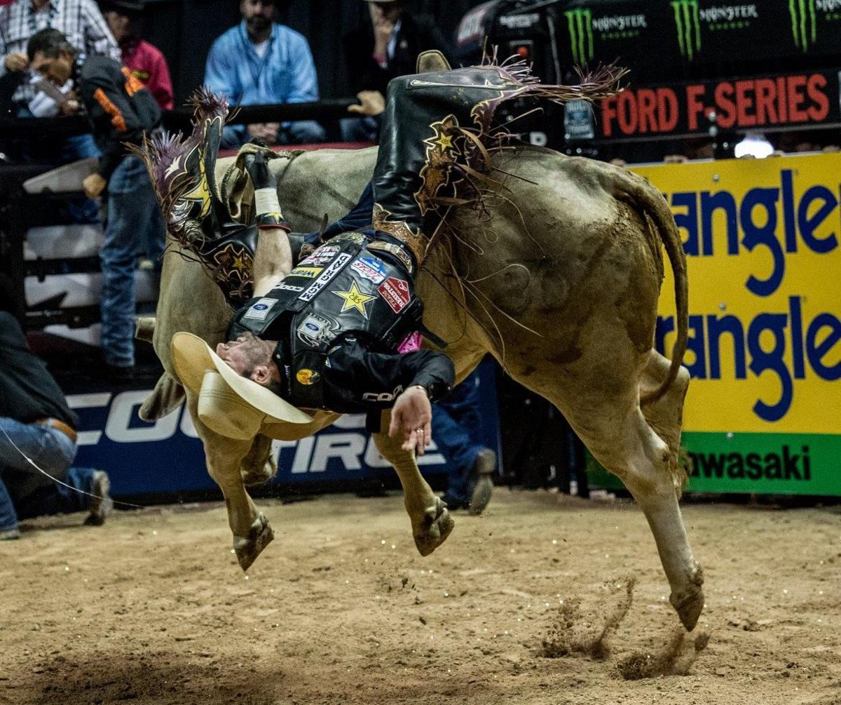 Rodeo Issue  How Are Bulls In Pbr Treated