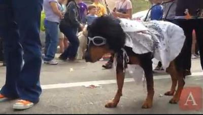 Video: Krewe of Mutts dog parade _lowres