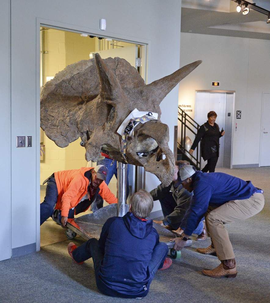 There's a 66 million-year-old triceratops in Baton Rouge _lowres