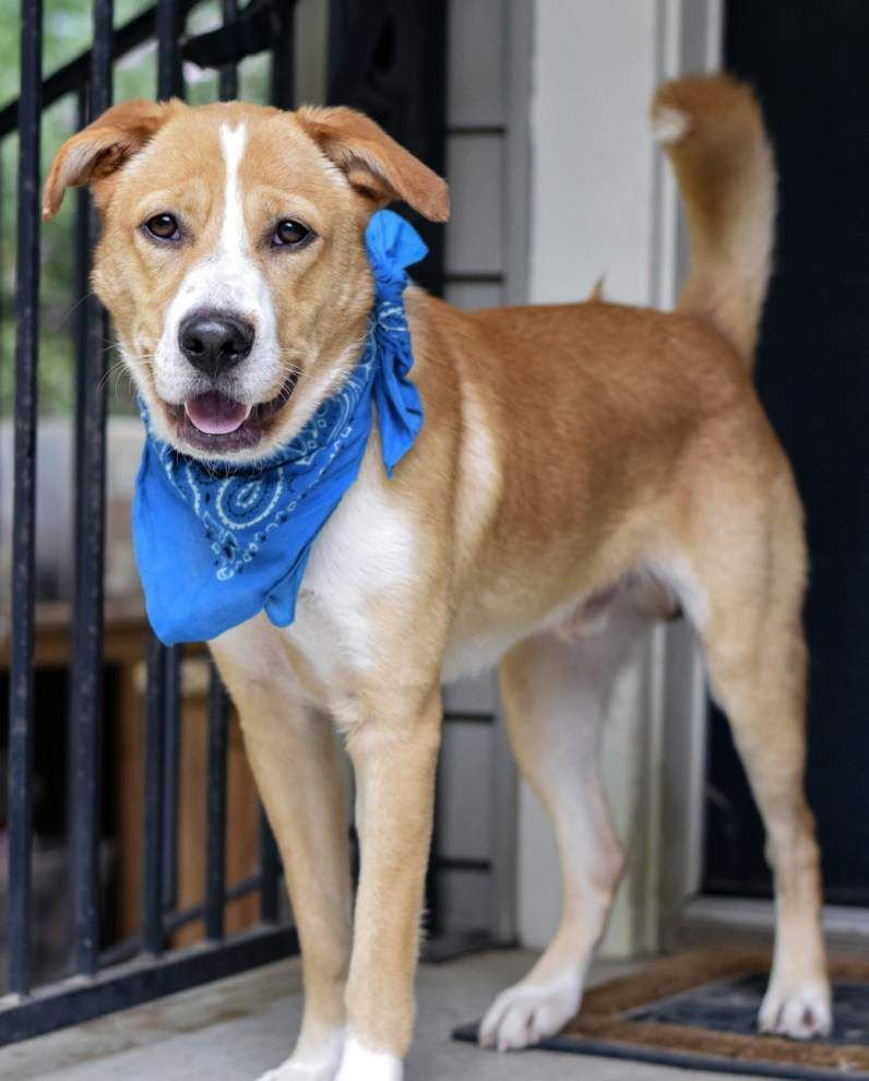 Mid City dogs available for Dec. 3, 2015 _lowres