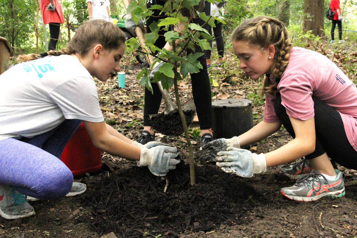 Sacred Heart NOLA tree project.jpg