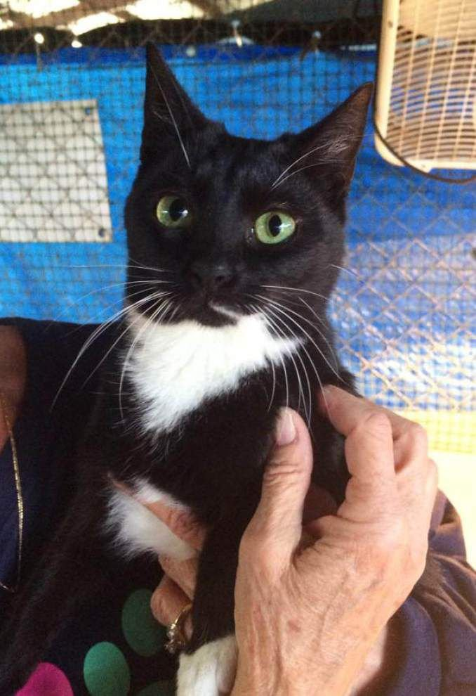 West Feliciana pets available for Dec. 4, 2014 _lowres