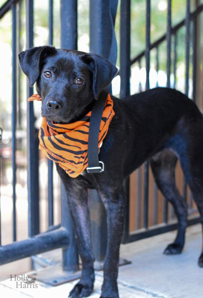 Mid City dogs available for March 17, 2016 _lowres