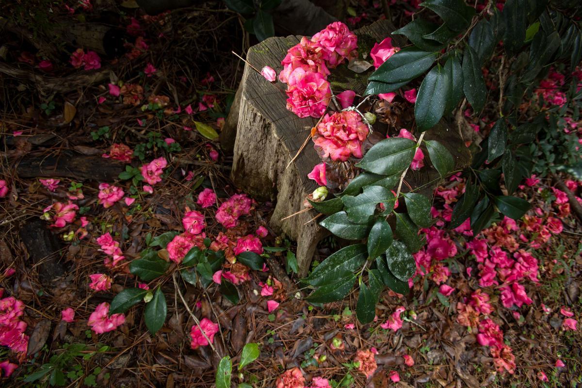 NO.garden.EPL024.010717.jpg