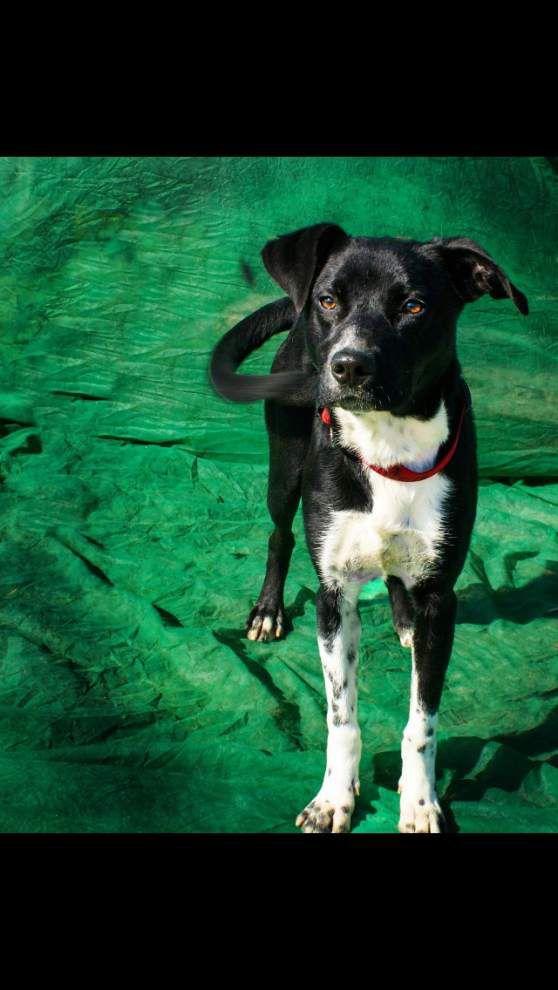 Livingston-Tangipahoa pets available for Feb. 5, 2015 _lowres