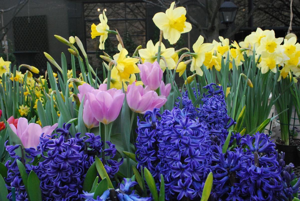 Digging in buy spring flowering bulbs now homegarden spring flowering bulbs mightylinksfo