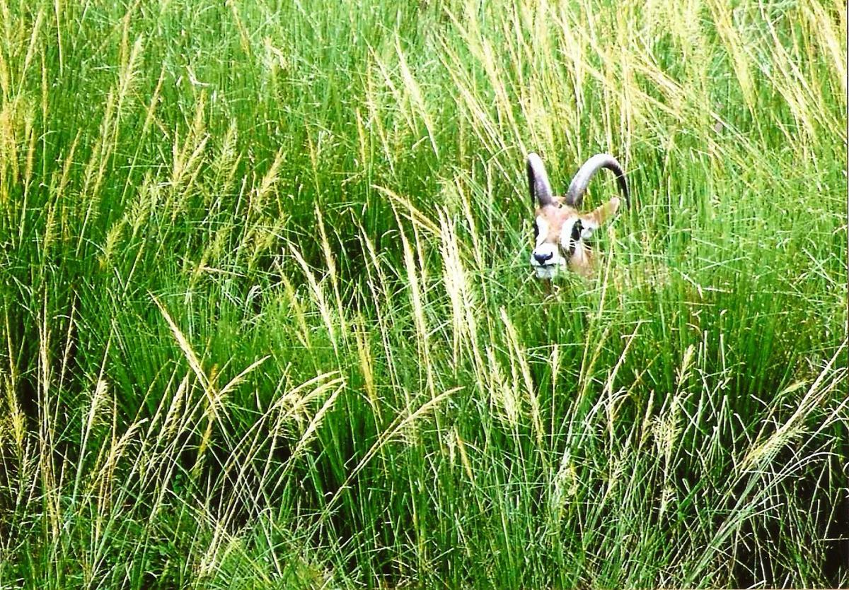 Antelope photo for Sunday, Aug. 13 Outdoors