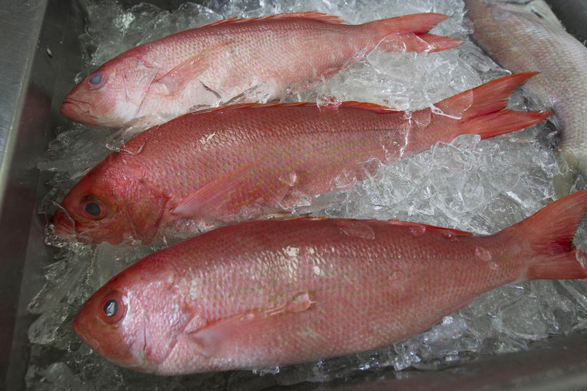 Red Snapper (copy)