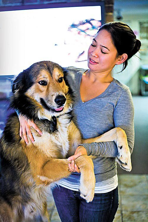 Shop Dog: Mochi at Ky's Chiropractic Clinic_lowres