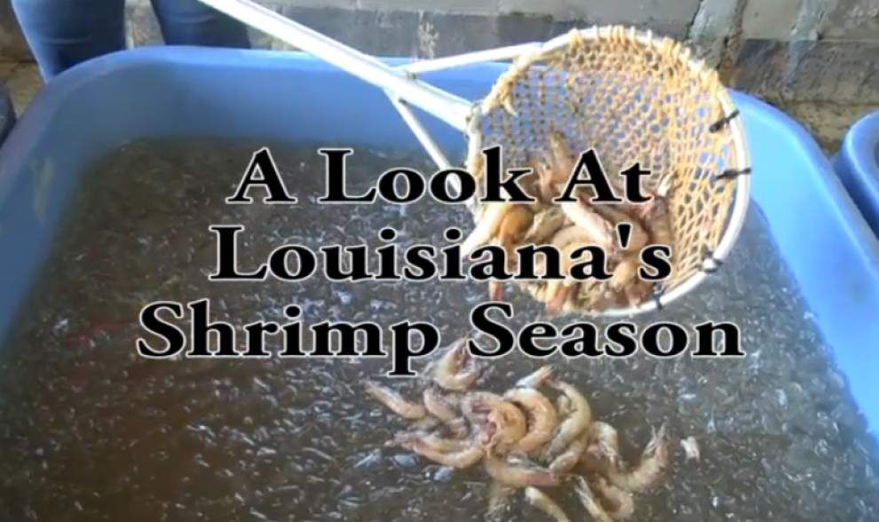 Video: A look at Louisiana's shrimp season _lowres