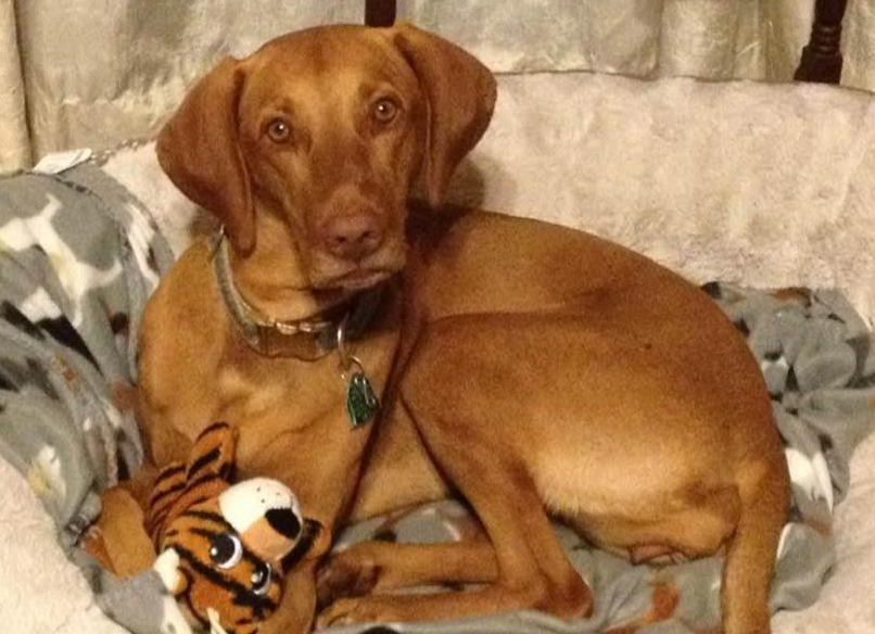 Dog missing after truck she was in was stolen in Baton Rouge