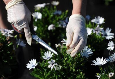plant sale al 0072.jpg