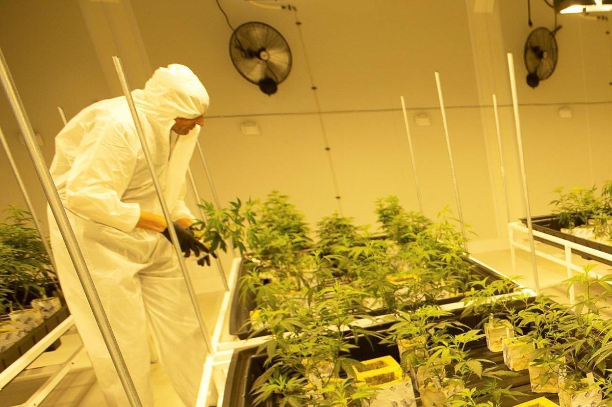 BR.marijuanalsu.adv.003