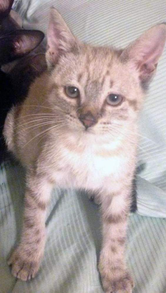 Mid City cats available for Sept. 17, 2015 _lowres