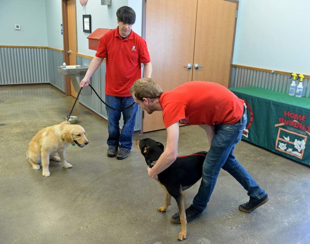 Socialization, stimulation key at Camp Bow Wow _lowres