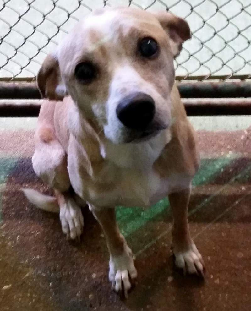 Ascension Parish pets available for Oct. 23, 2014 _lowres