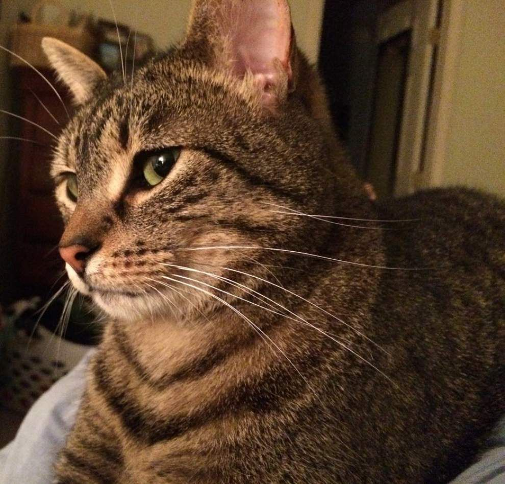 Mid City cats available for Aug. 13, 2015 _lowres