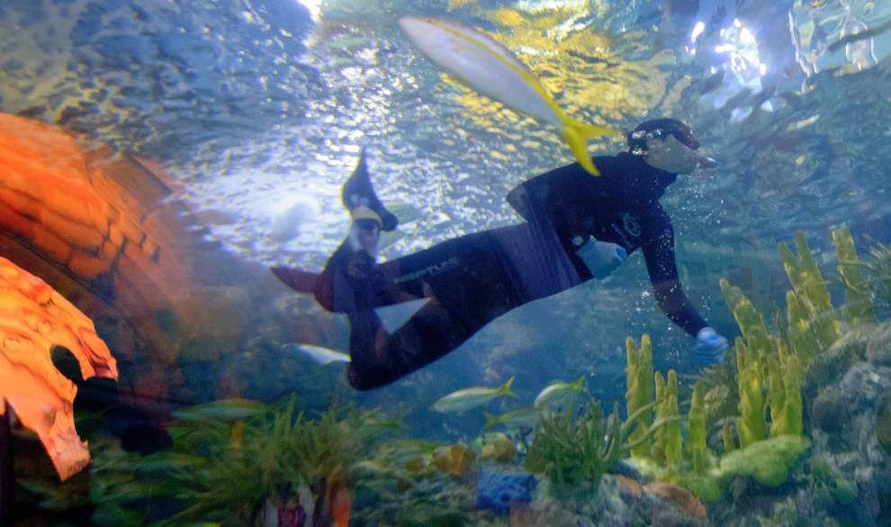 Aquarium lets visitors swim with creatures of the Caribbean _lowres