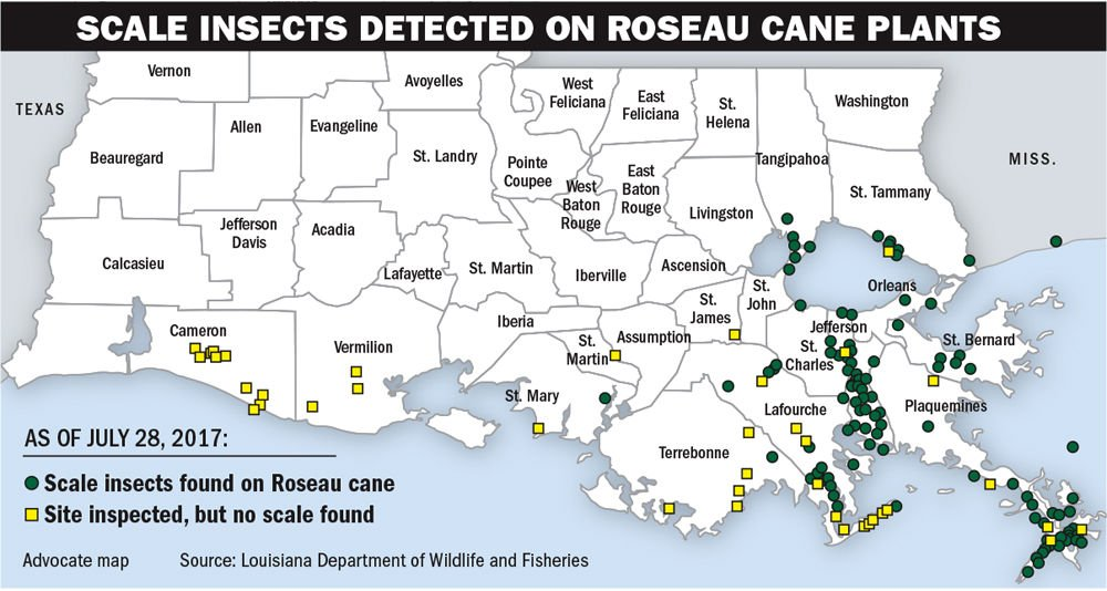 081417 Scale insect distribution.jpg