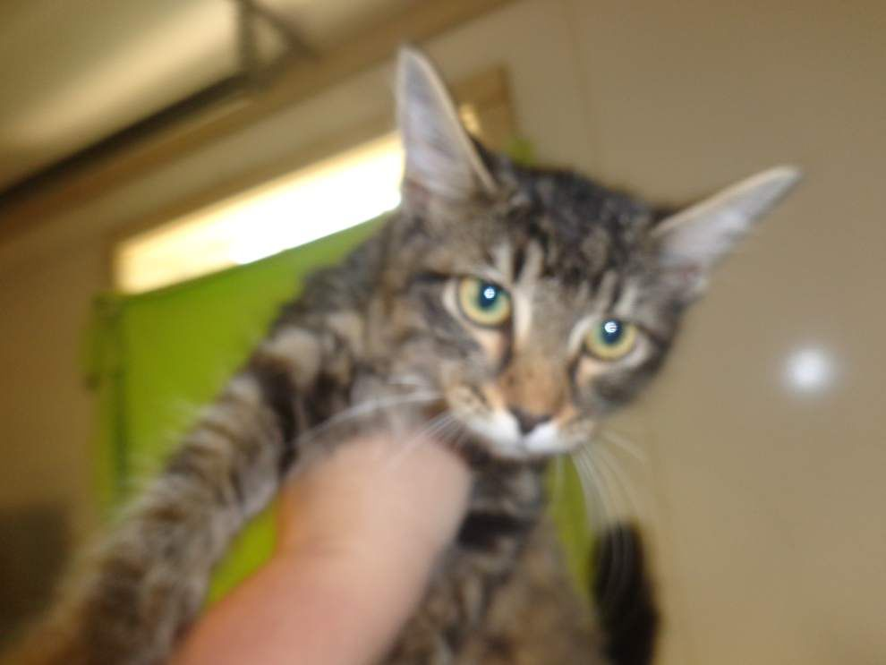 Livingston-Tangipahoa pets for July 31, 2014 _lowres