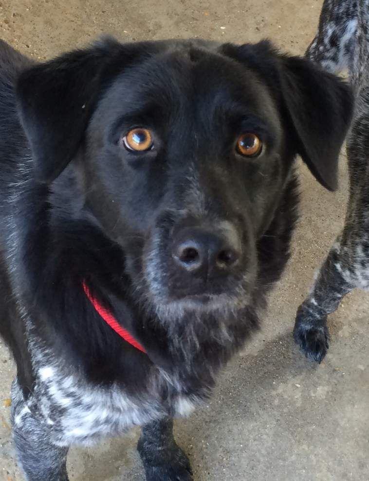 Livingston Parish pets available for Jan. 14, 2016 _lowres