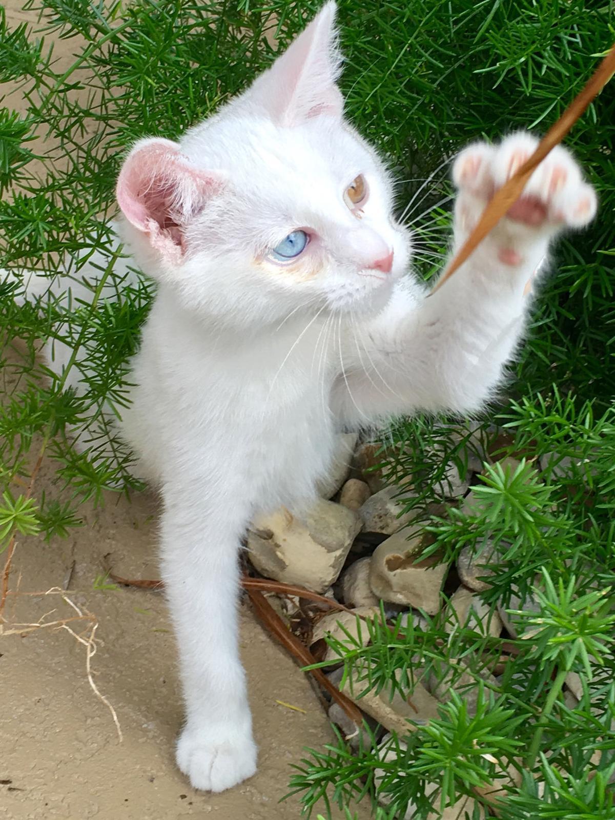 Asc Pets Hansel.jpg _lowres