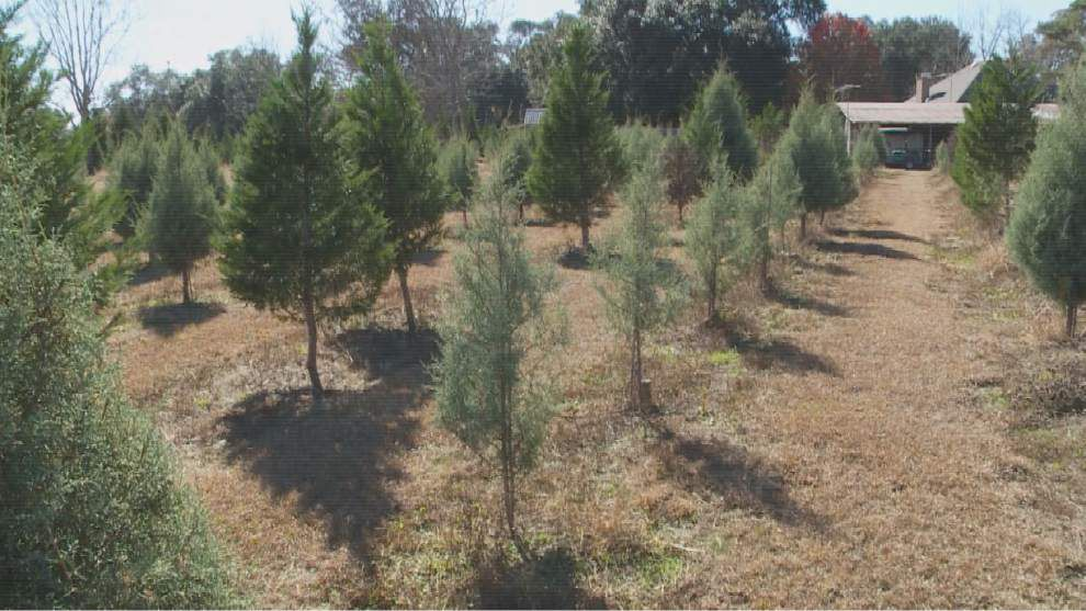 Grinch stole north shore tree farm's Christmas this year _lowres