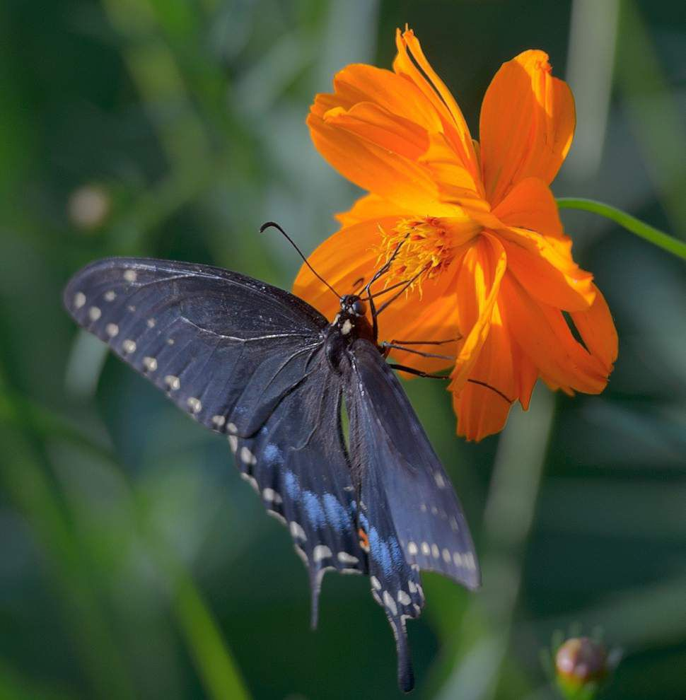 Replace some of your yard with flowers to cut maintenance, water use _lowres
