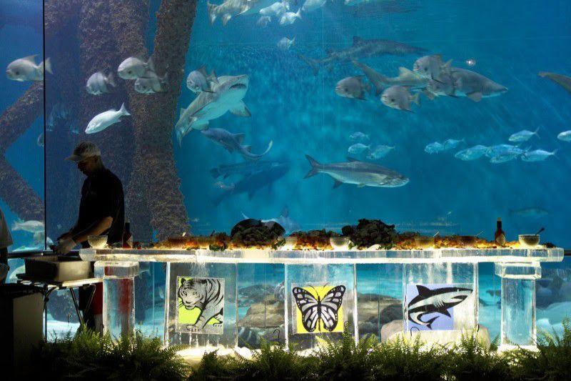 Dine with the sharks Sept. 24 at Audubon aquarium_lowres