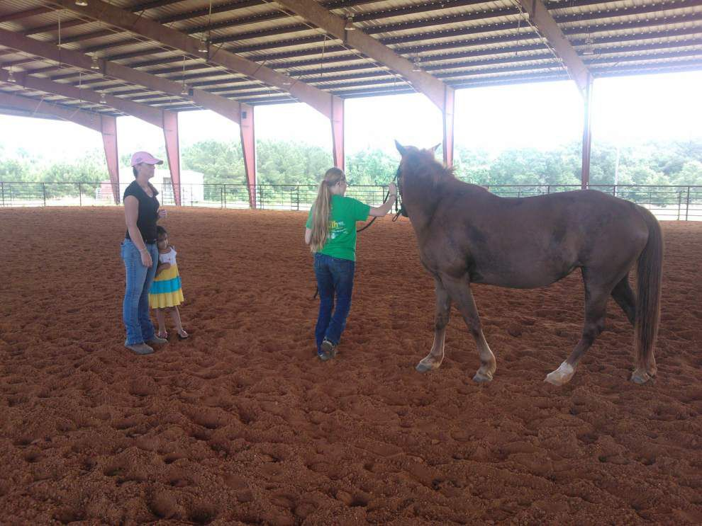 East Feliciana 4-H members get course on showing livestock _lowres