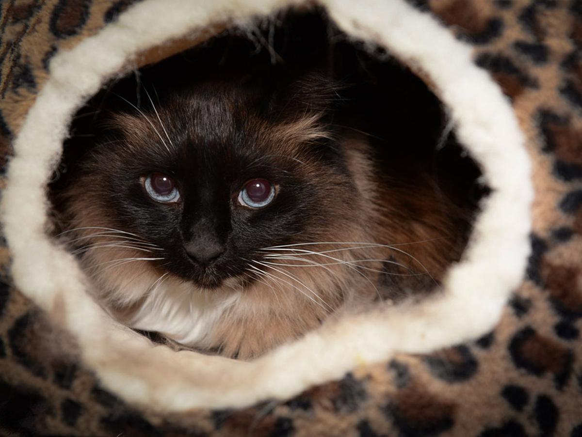 Cat_Haven-Metairie