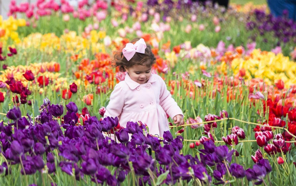 NO.tulips.022219.04.JPG (copy)