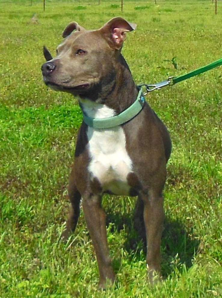 Pets available in West Feliciana, April 2, 2015 _lowres