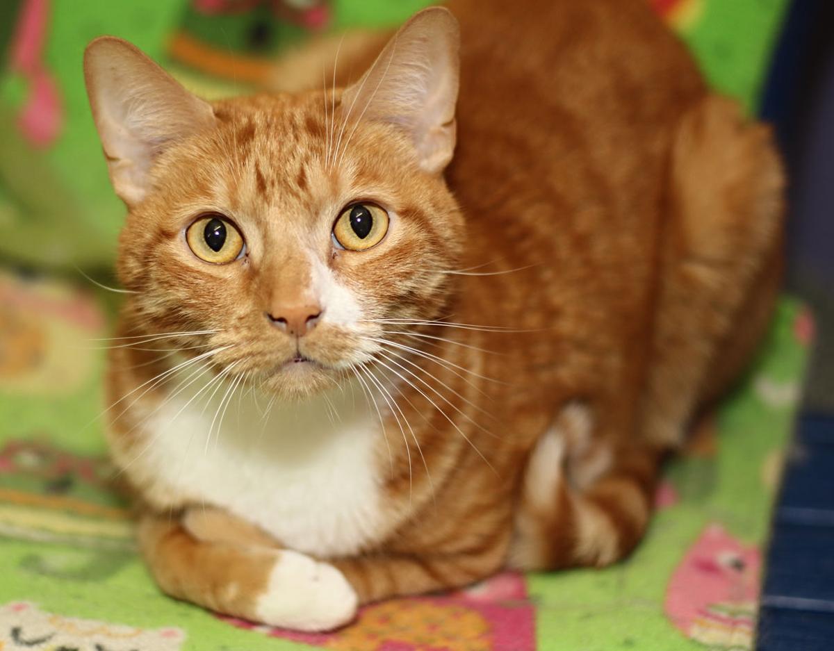 Cat Haven-Chewey.JPG