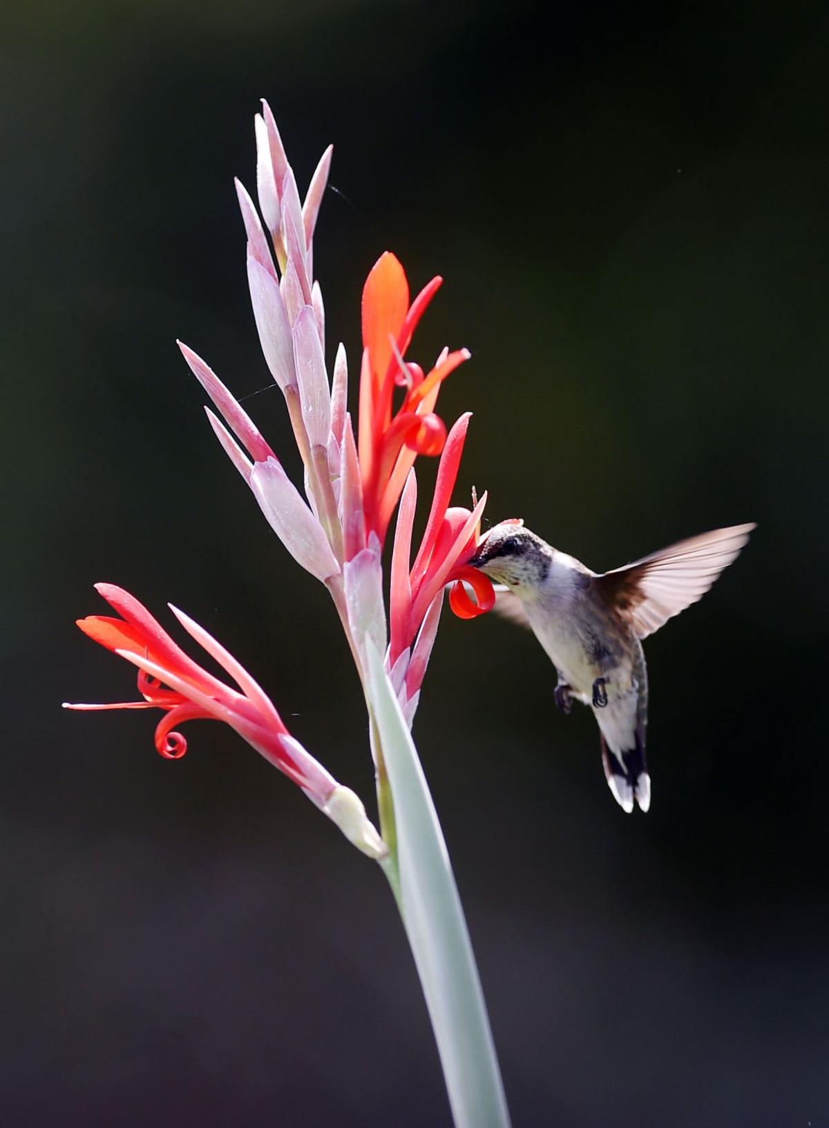 hummingbird (copy)