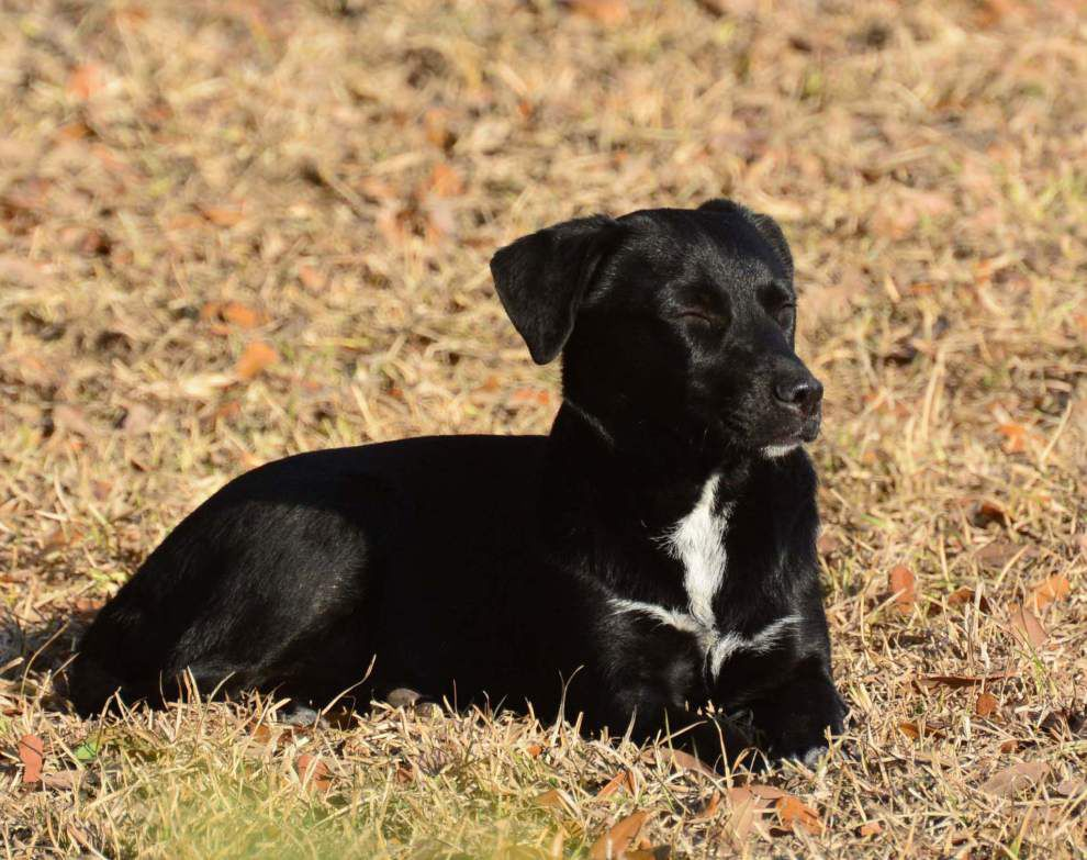 East Feliciana pets available for Jan. 29, 2015 _lowres