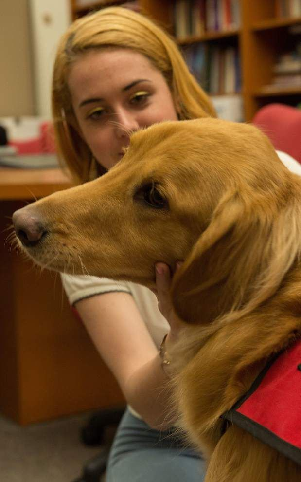 For Loyola students, 'comfort dog' makes college feel like home _lowres