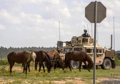 Army Feral Horses (copy)
