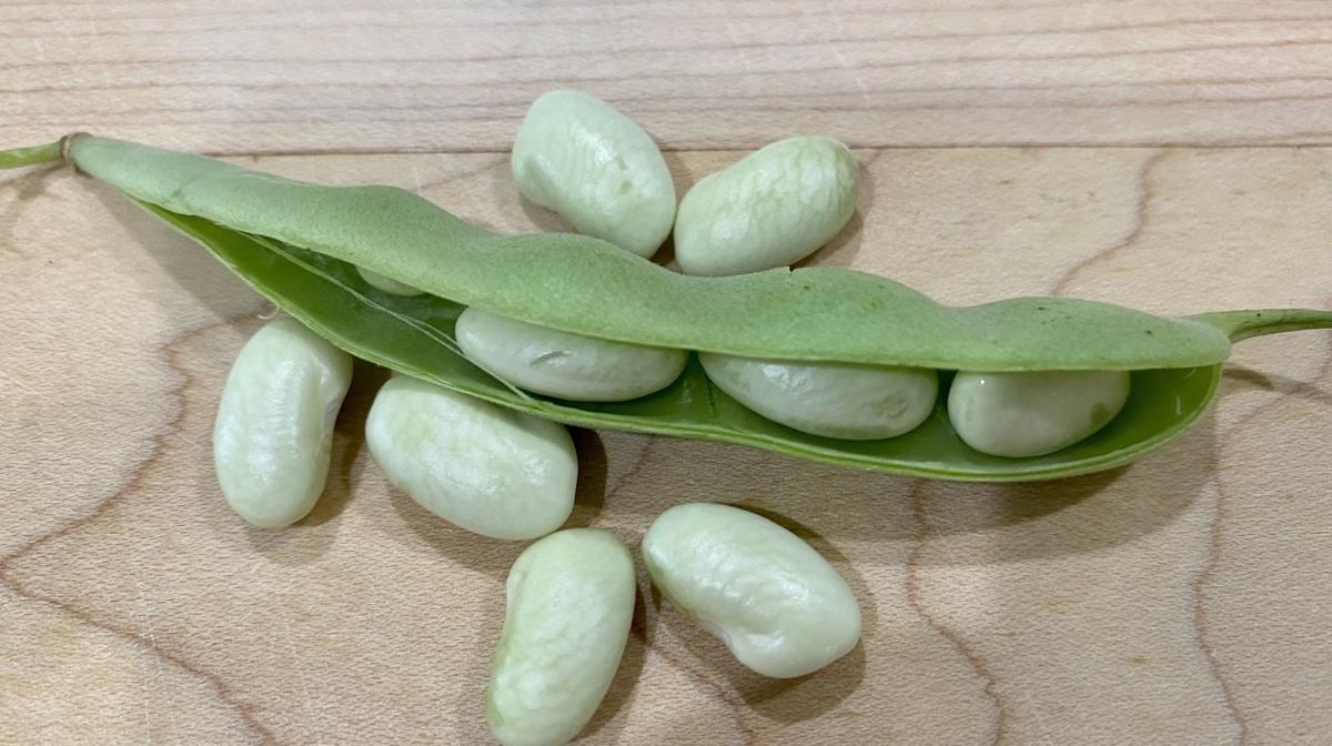 Seeds - beans.jpg