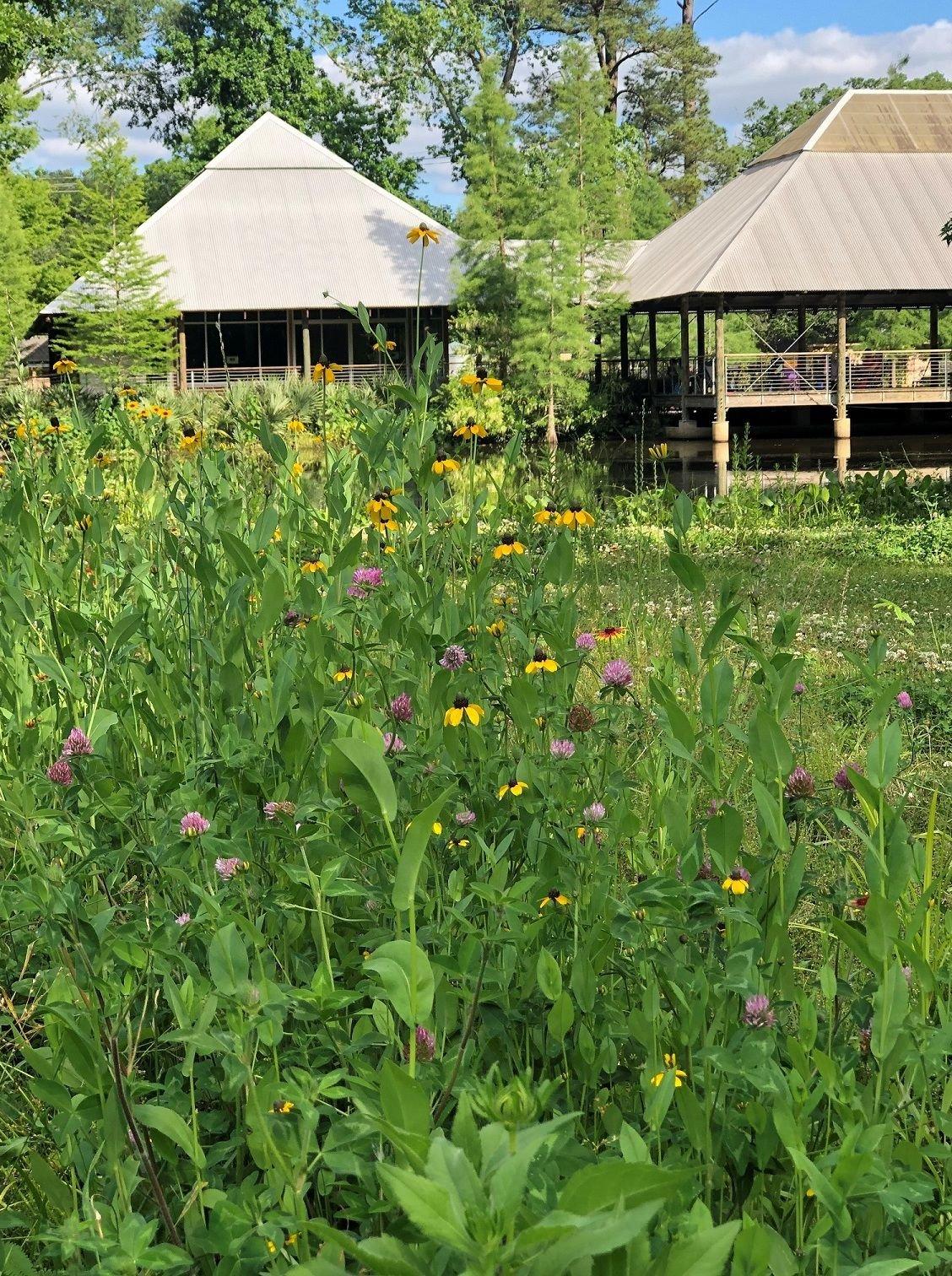 wildflowers at Hilltop.jpg