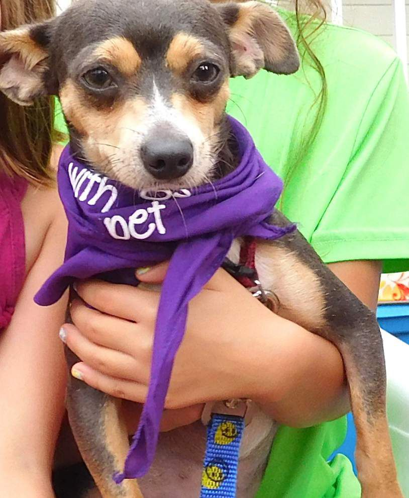 West Feliciana pets for adoption Sept. 10, 2015 _lowres