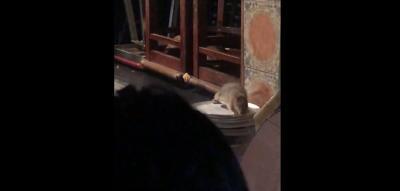 Rats at French Market
