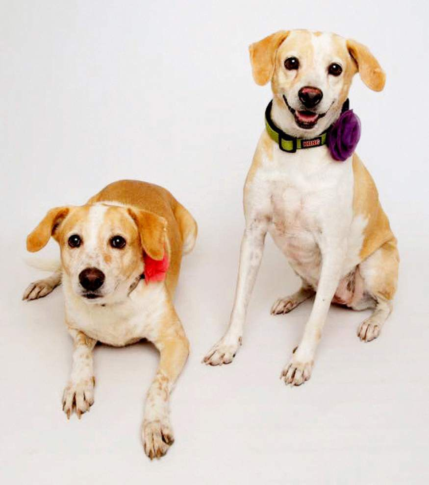 Animal Rescue: Puppies rescued after Hurricane Katrina are again up for adoption _lowres