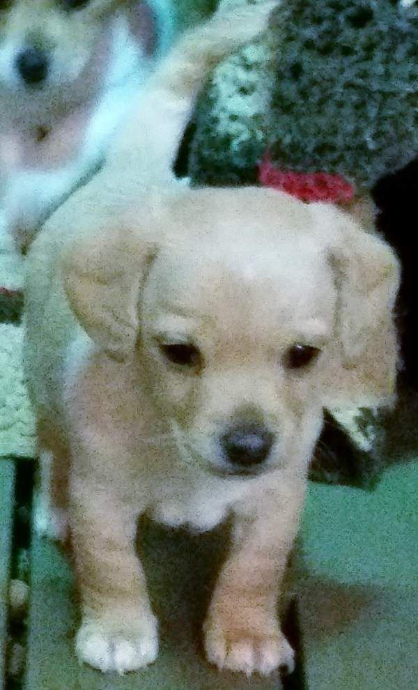 Ascension Parish pets available for Jan. 29, 2015 _lowres
