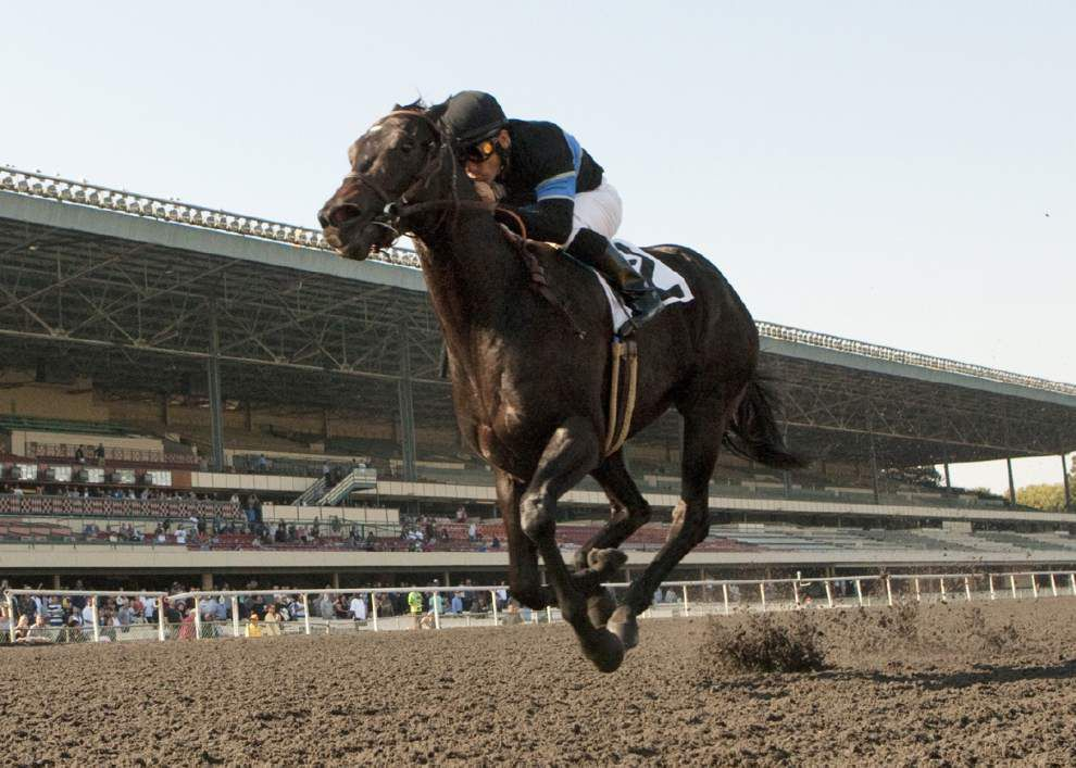 Shared Belief favored in Breeders' Cup Classic _lowres