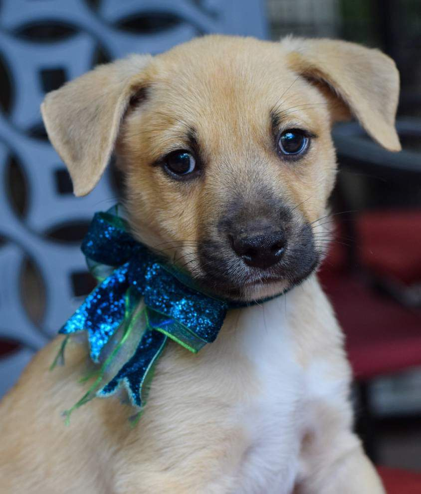 Mid City dogs available for June 16, 2016 _lowres