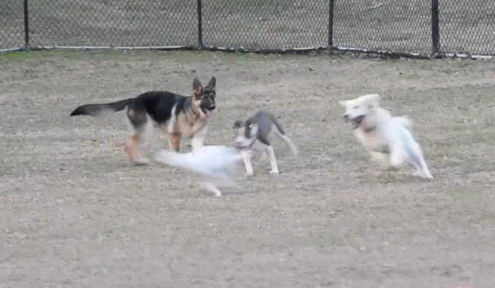 Video: Dog Park fun _lowres