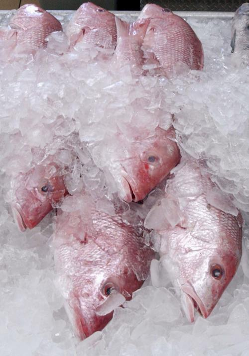 Red Snapper Overfishing